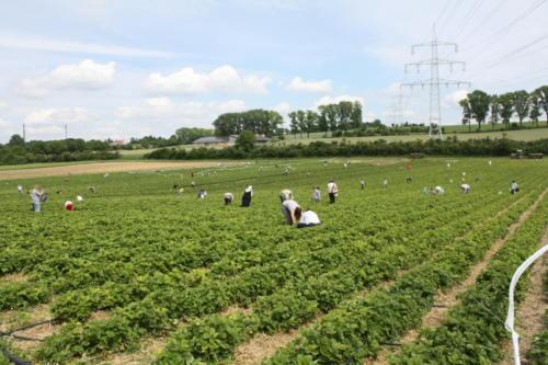 2 Erdbeerfest - 2012 - Bild 5