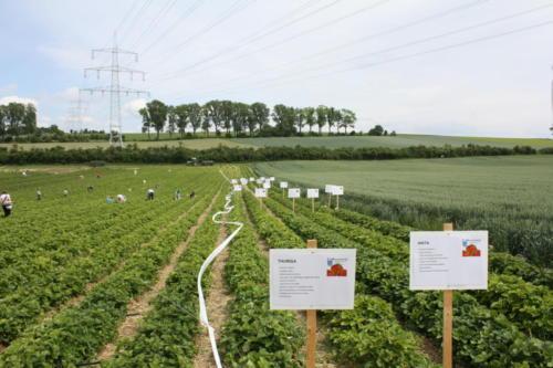 2 Erdbeerfest - 2012 - Bild 6