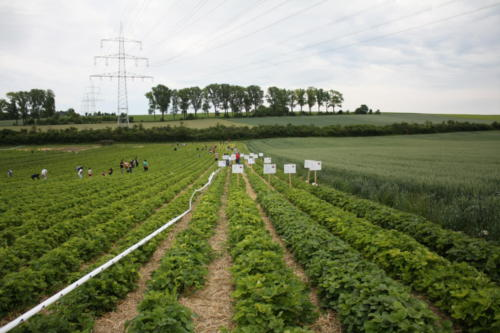 2 Erdbeerfest - 2012 - Bild 9
